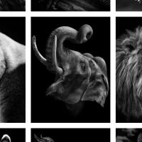 «Մենք նման ենք ձեզ». Միխայիլ Կիրակոսյանի ուշագրավ ֆոտոշարքը